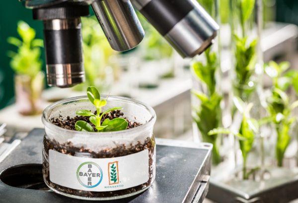 Bayer e Monsanto: una fusione storica